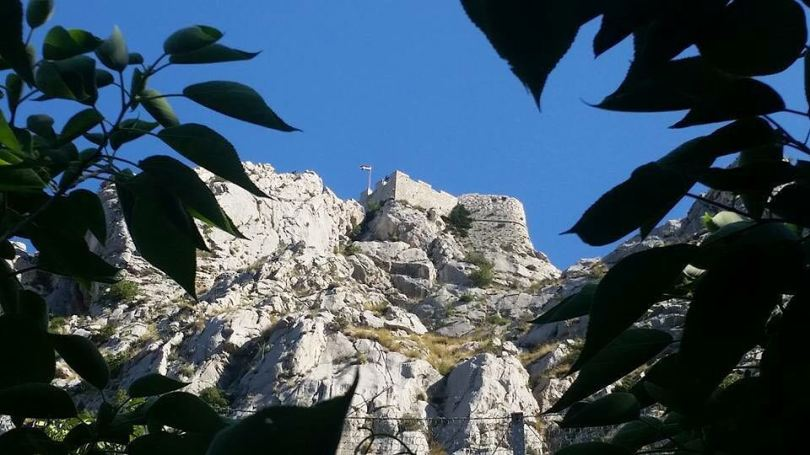fortica.omis